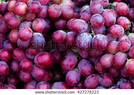 Red wine grapes background/ dark grapes, blue grapes , Red Grape , Vitis vinifera L. , VITACEAE , Cardinal Grape , Emperor Grape - stock photo