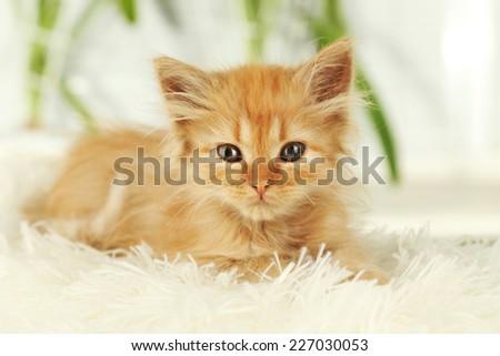 Redhead kitten on white plaid - stock photo