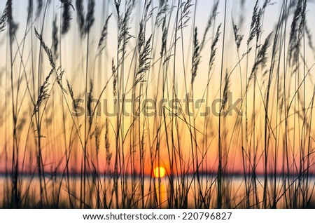 Reed against a colourful decline - stock photo