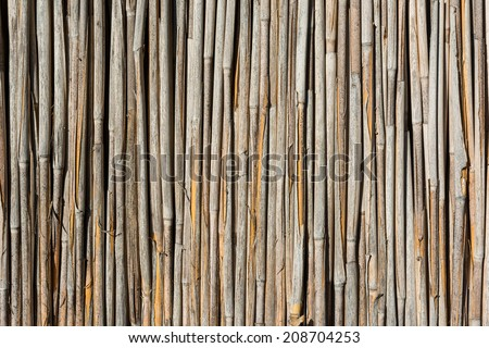 Reed Texture Close Up - stock photo