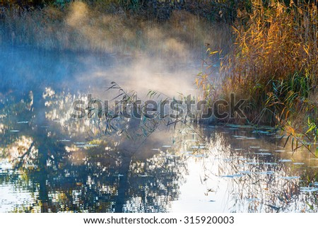 Reed with sunbeams in the Mist - stock photo