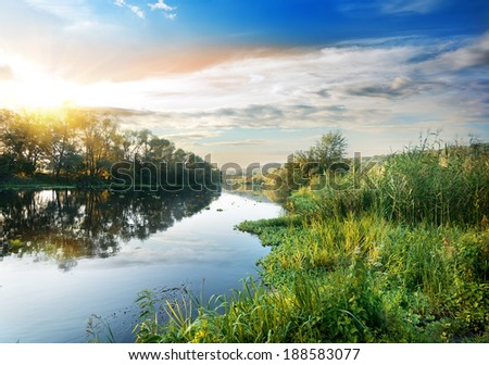 Reeds and duckweed on the river at sunset - stock photo