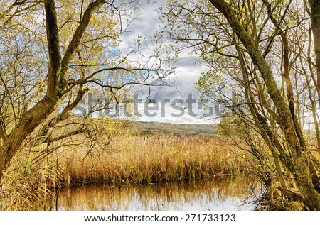 Reeds and pond at Leighton Moss, Lancashire - stock photo