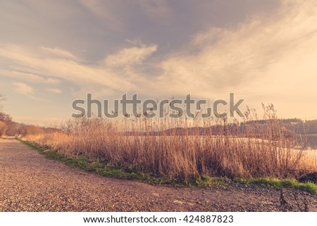 Reeds by a road near a frozen lake in the winter - stock photo