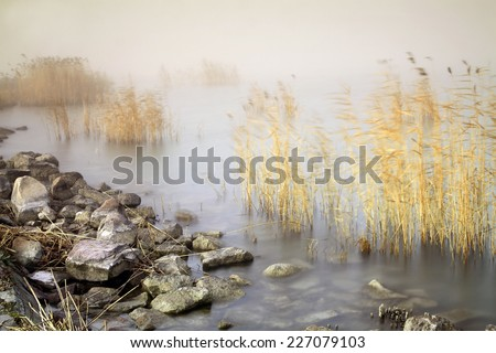 Reeds in the wind with stones - stock photo