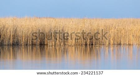 reeds on Lake Outdoors - stock photo