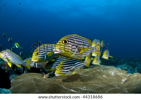 Reef and colored fish, Indian ocean, Maldives - stock photo