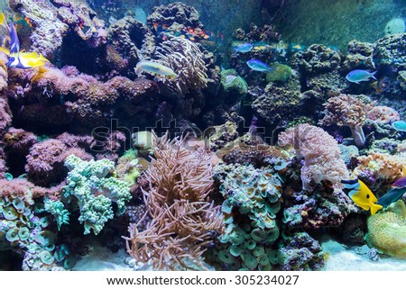 reef and fish under water background - stock photo