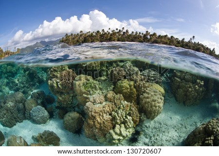 Reef-building coral colonies grow on the edge of a low-lying island just off of Raiatea and Tahaa in French Polynesia. - stock photo