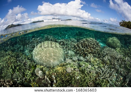 Reef-builiding corals compete for space to grow, for sunlight, and for planktonic food on a shallow coral reef in the Solomon Islands. This area is known for its high marine biological diversity. - stock photo