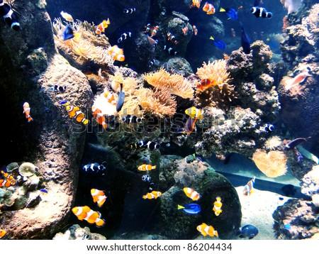 Reef Full of Fish - stock photo