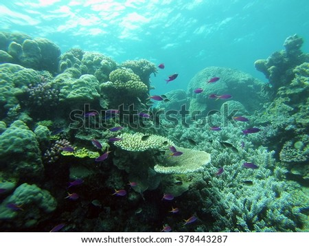 Reef with a variety of corals and school of purple fish swimming above it - stock photo