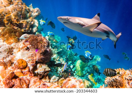 Reef with a variety of hard and soft corals and tropical fish. Maldives Indian Ocean. - stock photo