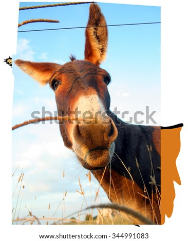 reference image for vector - stock photo