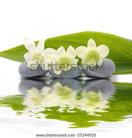 Reflection for zen stones and orchid ,green leaf - stock photo