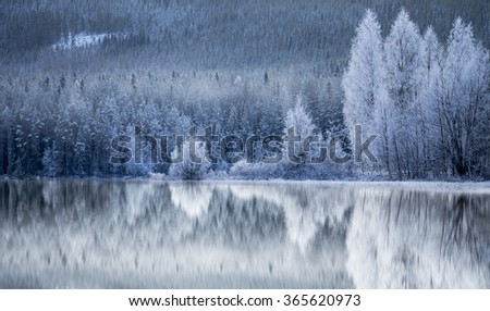 Reflection in ice of forest of conifers and birch trees covered in rime frost  - stock photo
