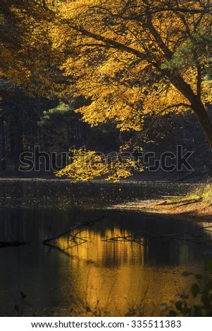 Reflection of brilliant yellow and orange fall foliage, on dark water of lake in Mansfield Hollow forest, Connecticut. - stock photo