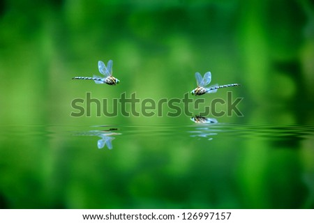 Reflection of two dragonflies hovering over lake water - stock photo