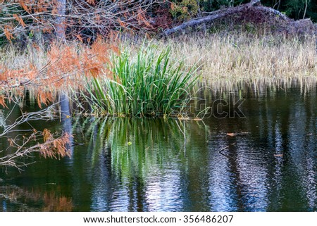 Reflections on Colorful Creekfield Lake, with Interesting Cloud Formations, Fall Colors, Trees, and Grasses.  Home to Ducks, Alligators and a Multitude of Wildlife.  Brazos Bend State Park, Texas. - stock photo