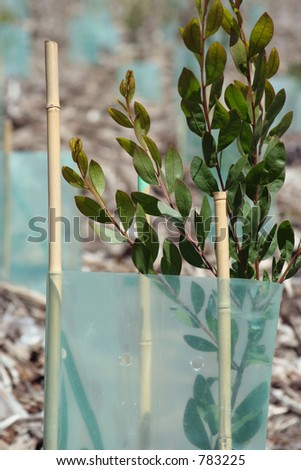 reforestation - stock photo