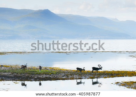 Reindeer against mountain lake background - stock photo