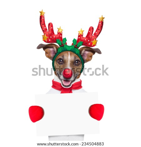 reindeer dog holding  a blank white placard or banner with a red nose , isolated on white background - stock photo