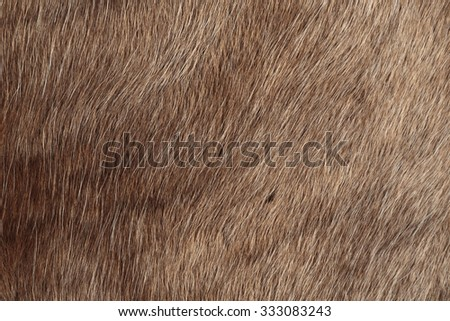 Reindeer fur, close up background - stock photo