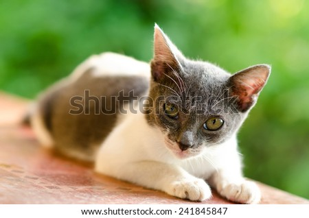 Relaxed Cute Kitten, Young cat - stock photo