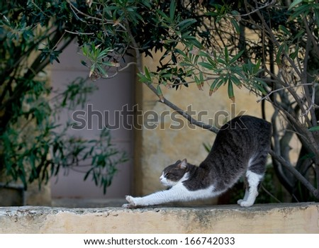 Relaxing cat on siesta time, cat resting, cat in street on sunny day, lazy cat in the street lazy cat on day time,wild cat,grey cat outside,cat isolated in green background in the village - stock photo
