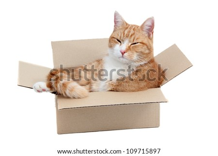 relaxing cute tomcat in box - stock photo