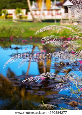 RELAXING POND OF LILIES AND TALL GRASS TOBAGO NATURE  - stock photo