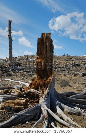 Remains of a tree - stock photo