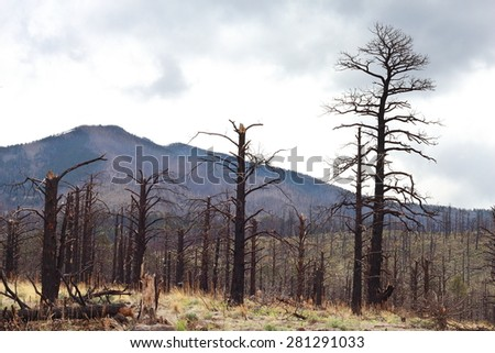 Remains of Burned trees from drought - stock photo