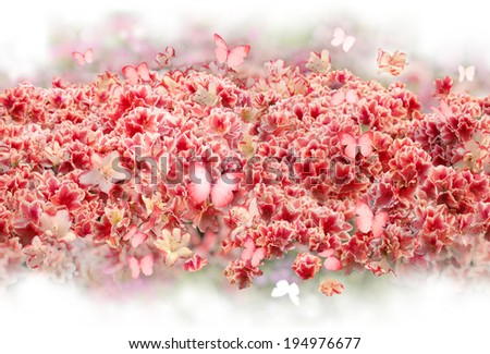 repeatable scattered bush of rhododendron flowers with similarly pink colored, flying butterflies, softly fading into absolute white - stock photo