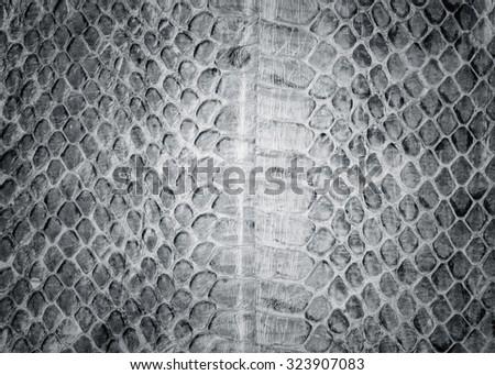 Reptile skin,snake skin background,Snake skin pattern background,white black leather background. - stock photo