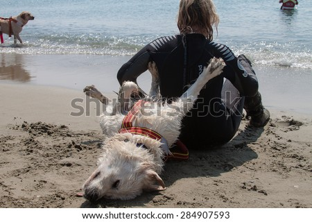 rescue dog - stock photo