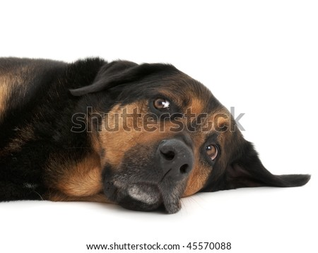 Rescue dog lying down with comical look - stock photo