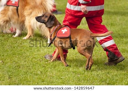 Rescue Dog Squadron in Germany - stock photo