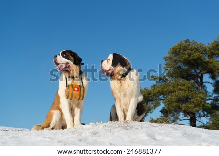 Rescue dogs with wooden barrel in snow landscape - stock photo