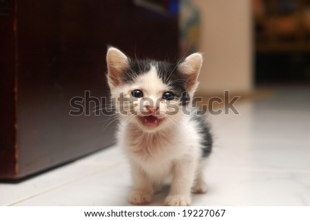 Rescue Kitten - stock photo