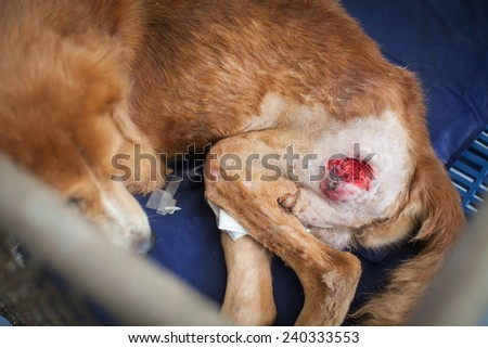 Rescued stray dog by the Foundation in Thailand - stock photo