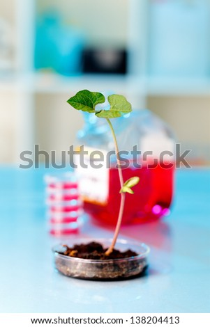 Research of genetically modified plants in the laboratory - stock photo