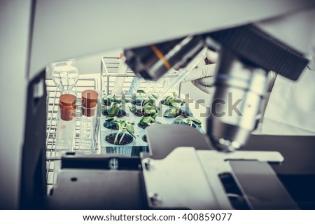 Research Scientist (sunflower industry laboratory, for use in the agriculture industry) - stock photo