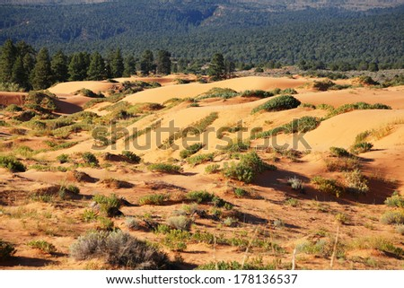 Reserve Coral Pink sand dunes in the U.S.. Low bushes prominently stand out against a pink-orange sand - stock photo