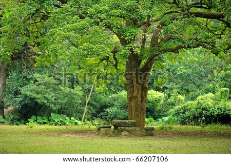 rest place under big tree - stock photo