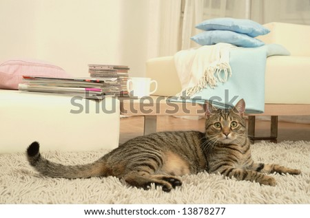 Resting cat - stock photo