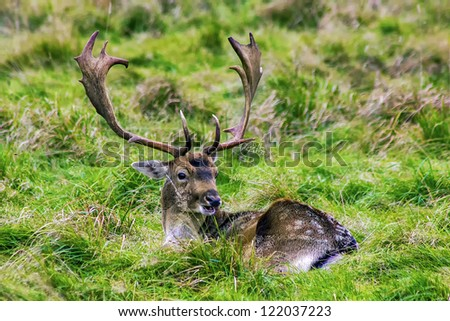 Resting deer - stock photo