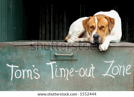 Resting Dog - stock photo