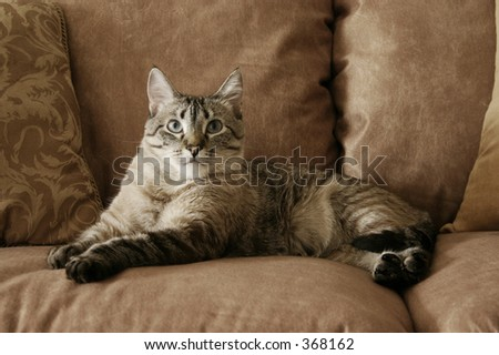 Resting on the furniture - stock photo