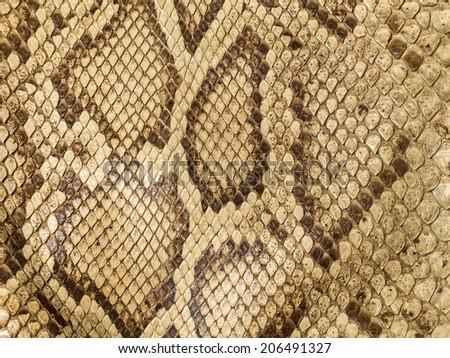 Reticulated python skin - stock photo